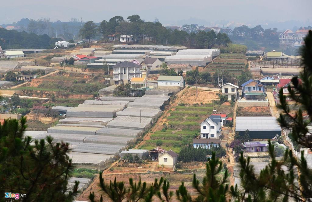 Nhà kính phủ trắng đồi khiến Đà Lạt thành sông - Ảnh 7.