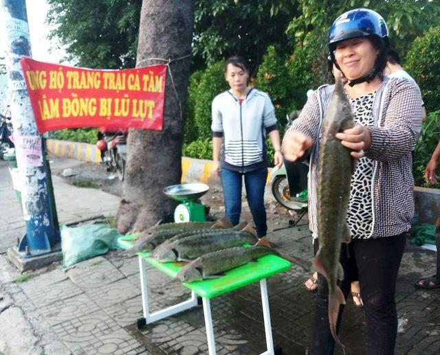Dân TP HCM đổ xô mua cá tầm 100.000 đồng/kg ủng hộ người nuôi cá vùng lũ - Ảnh 1.
