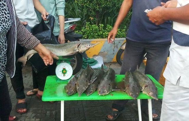Dân TP HCM đổ xô mua cá tầm 100.000 đồng/kg ủng hộ người nuôi cá vùng lũ - Ảnh 2.