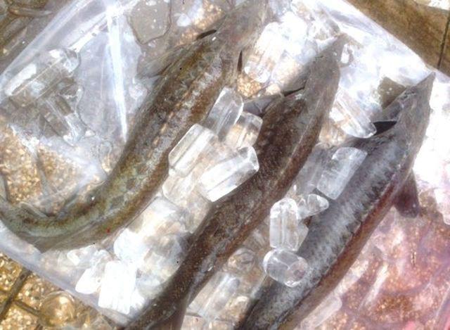 Dân TP HCM đổ xô mua cá tầm 100.000 đồng/kg ủng hộ người nuôi cá vùng lũ - Ảnh 3.