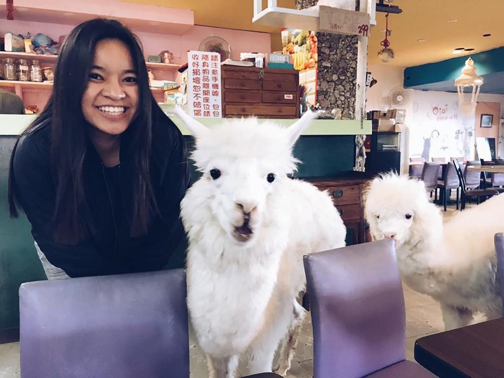Quán cà phê lạc đà siêu dễ thương hút khách ở Đài Loan - Ảnh 5.