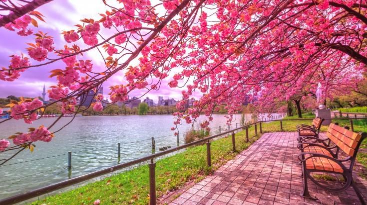 ueno-park-1563360045-735X412