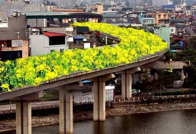"""Bất ngờ hình ảnh """"chế"""" đường sắt trên cao Cát Linh - Hà Đông thành con đường hoa cải - Ảnh 1."""