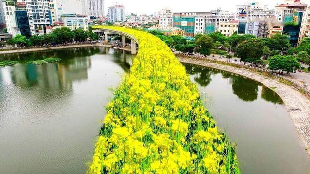 """Bất ngờ hình ảnh """"chế"""" đường sắt trên cao Cát Linh - Hà Đông thành con đường hoa cải - Ảnh 2."""