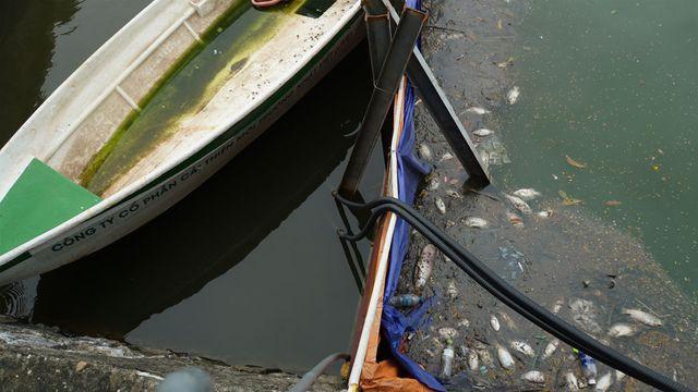 Cá chết nổi bốc mùi hôi thối ở Hồ Tây, hồ Đắc Di - Ảnh 12.