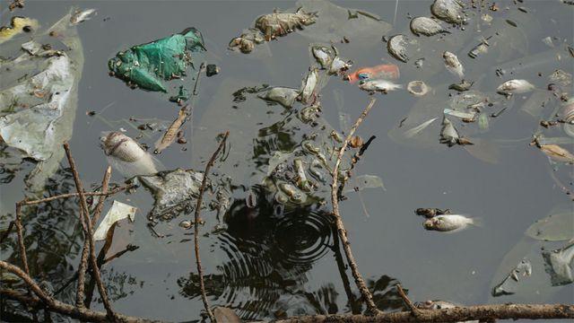 Cá chết nổi bốc mùi hôi thối ở Hồ Tây, hồ Đắc Di - Ảnh 2.