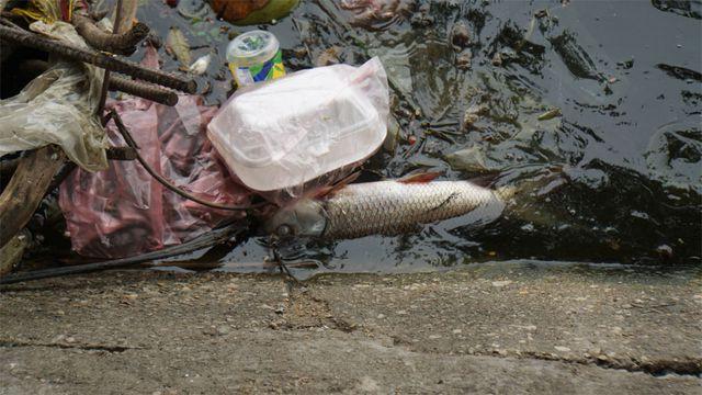 Cá chết nổi bốc mùi hôi thối ở Hồ Tây, hồ Đắc Di - Ảnh 4.