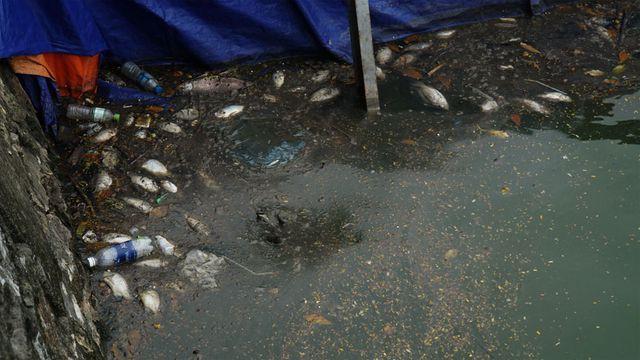 Cá chết nổi bốc mùi hôi thối ở Hồ Tây, hồ Đắc Di - Ảnh 8.