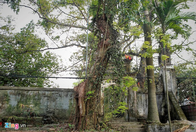Làng ngoại thành Hà Nội dự kiến thu về 150 tỷ từ bán đấu giá gỗ sưa - Ảnh 1.