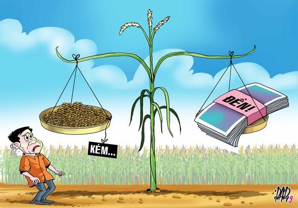 11 nông dân đi kiện lên tòa vì    lúa trổ bông không đều