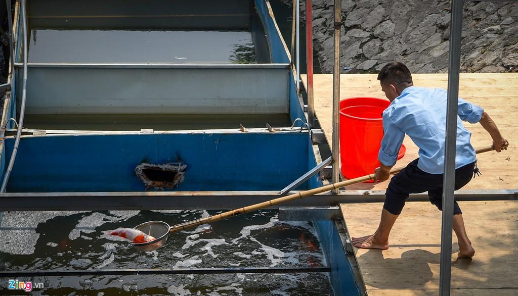 Cá Koi lờ đờ, chết ngửa bụng sau 2 ngày ở bể xử lí nước sông Tô Lịch - Ảnh 2.