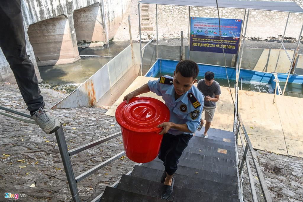 Cá Koi lờ đờ, chết ngửa bụng sau 2 ngày ở bể xử lí nước sông Tô Lịch - Ảnh 3.