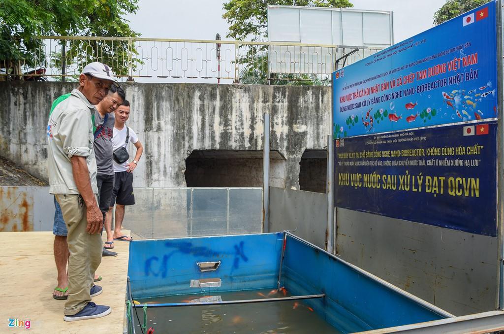 Cá Koi lờ đờ, chết ngửa bụng sau 2 ngày ở bể xử lí nước sông Tô Lịch - Ảnh 5.