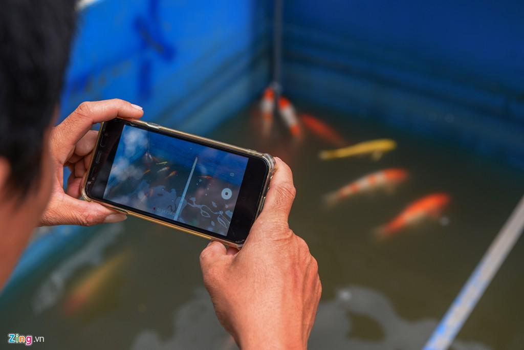 Cá Koi lờ đờ, chết ngửa bụng sau 2 ngày ở bể xử lí nước sông Tô Lịch - Ảnh 6.
