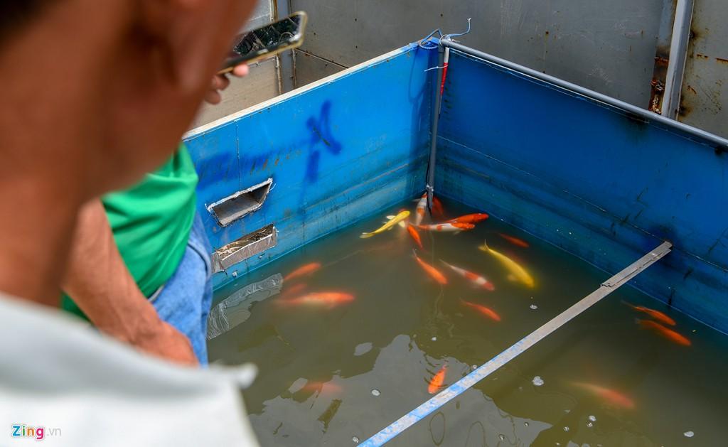 Cá Koi lờ đờ, chết ngửa bụng sau 2 ngày ở bể xử lí nước sông Tô Lịch - Ảnh 7.