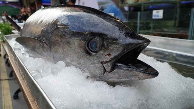Hàng trăm du khách hiếu kỳ xem mổ cá ngừ 70 kg ở phố đi bộ Bùi Viện - Ảnh 3.