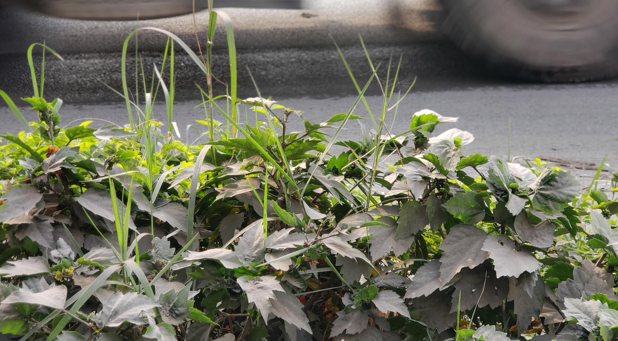 Hà Nội ô nhiễm không khí, người dân thêm khổ khi hít bụi mù mịt trên đường 70 đoạn Nhổn - Hà Đông - Ảnh 6.