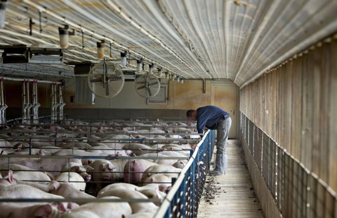 Cơn khát thịt heo của Trung Quốc đang định hình lại chuỗi cung ứng thịt toàn cầu - Ảnh 2.