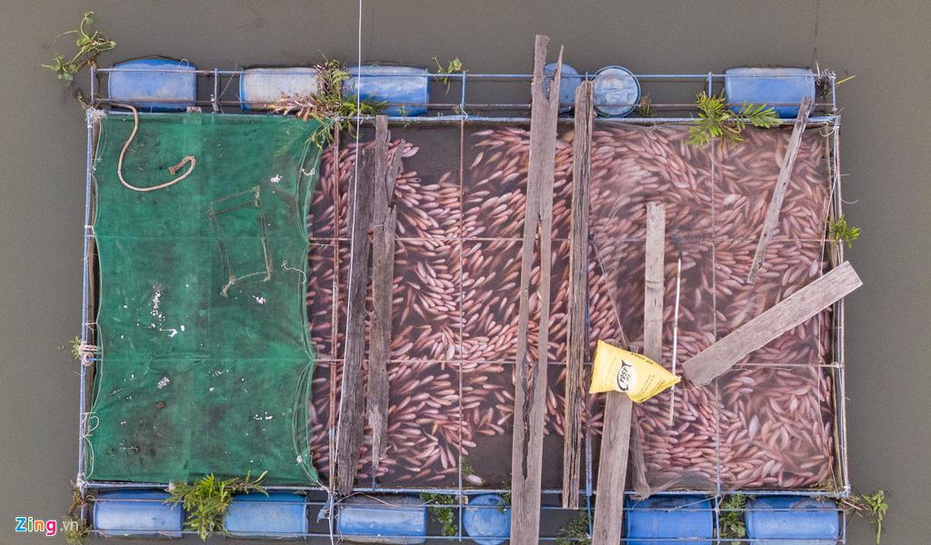 Người miền Tây lo cá chưa kịp lớn đã chết vì mặn đến sớm - Ảnh 2.