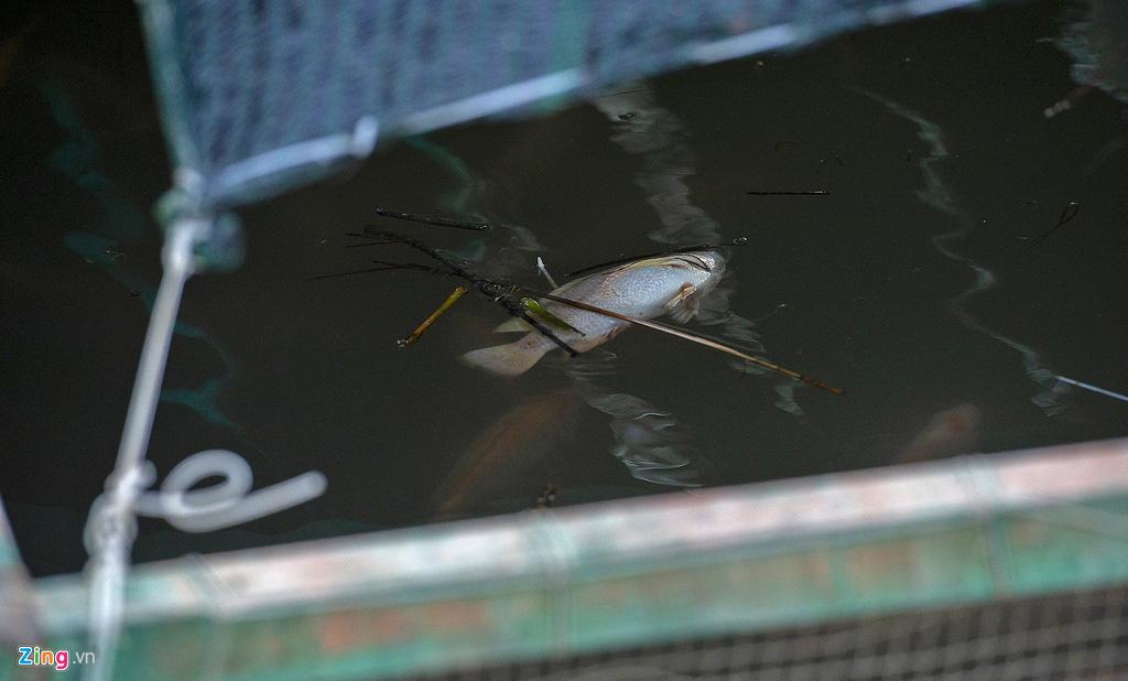 Người miền Tây lo cá chưa kịp lớn đã chết vì mặn đến sớm - Ảnh 8.