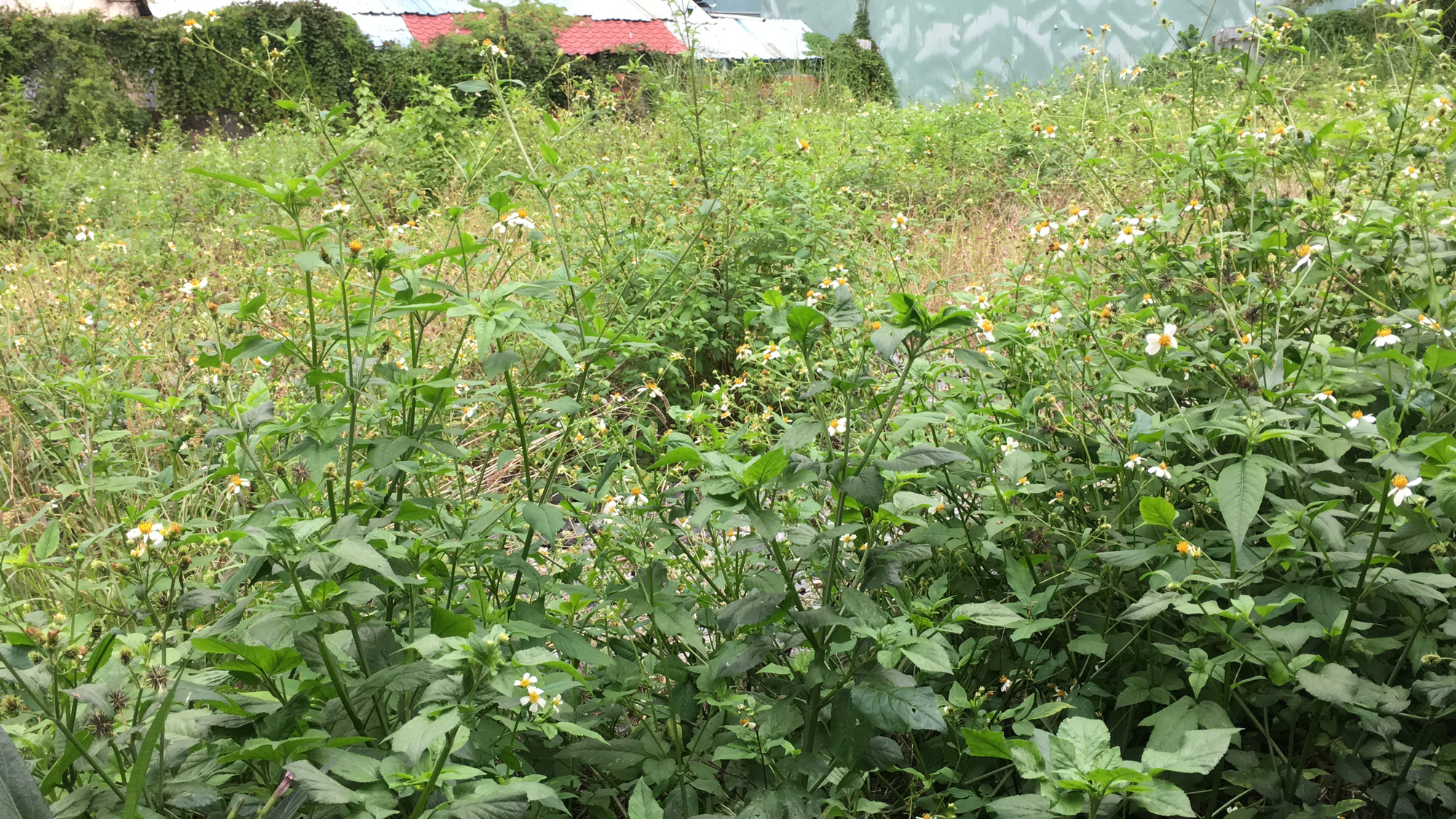 Hai khu đất làm vườn dạo, bãi đỗ xe ngầm trung tâm Đà Nẵng bao giờ 'khởi động'? - Ảnh 7.