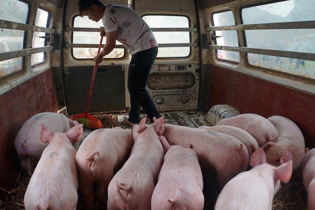 Người Trung Quốc có thể sẽ đón Tết thiếu món sủi cảo, thịt heo kho - Ảnh 4.