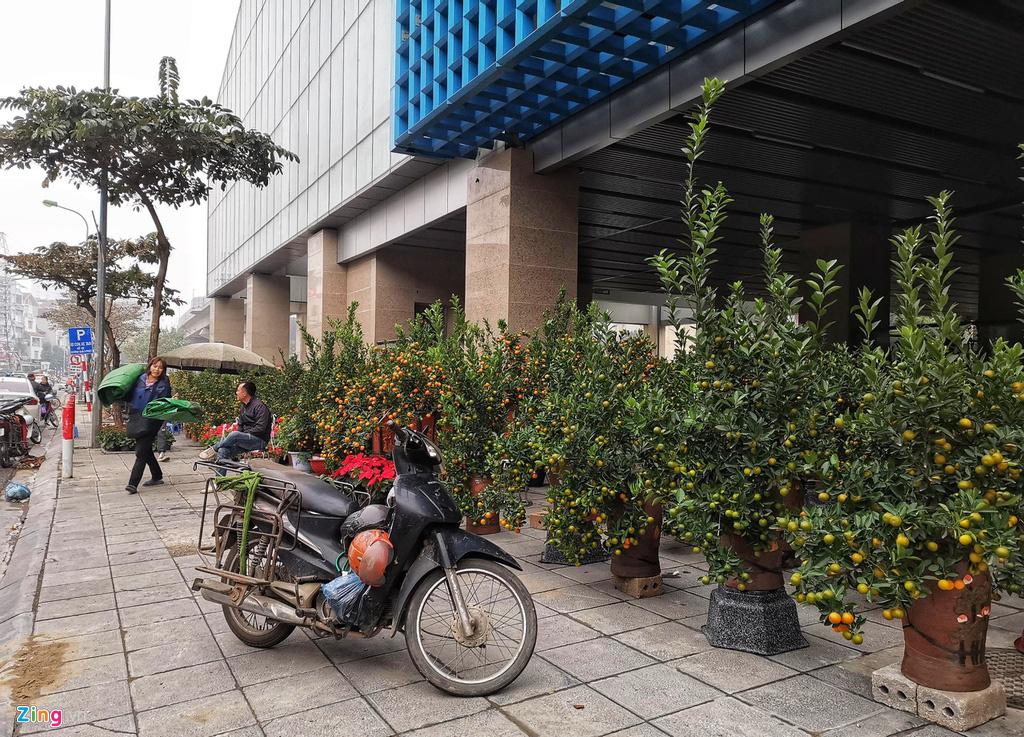 Đường sắt Cát Linh chưa hoạt động, nha ga thành chợ cây cảnh Tết - Ảnh 2.