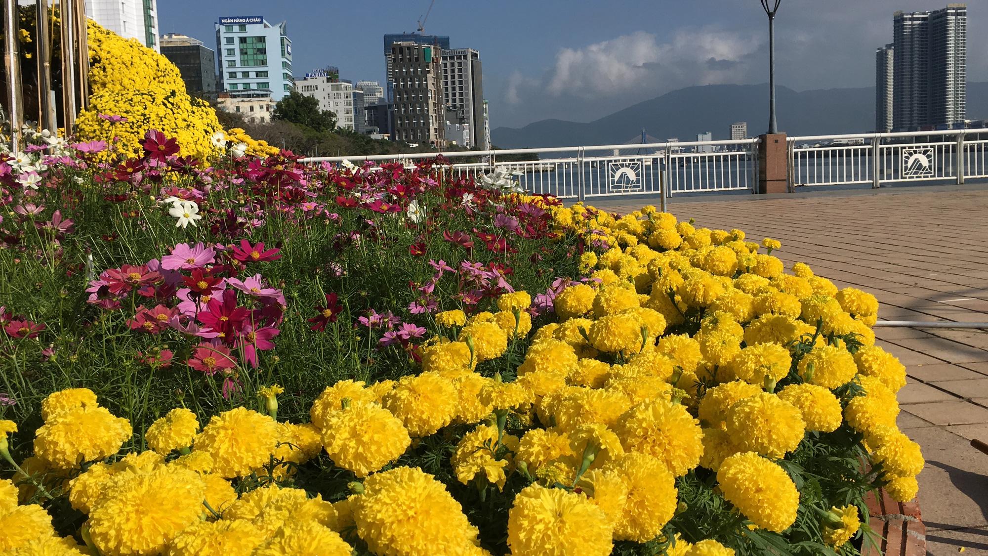 Hối hả thi công đường hoa Đà Nẵng để người dân tham quan, chơi Tết Canh Tý 2020 - Ảnh 10.