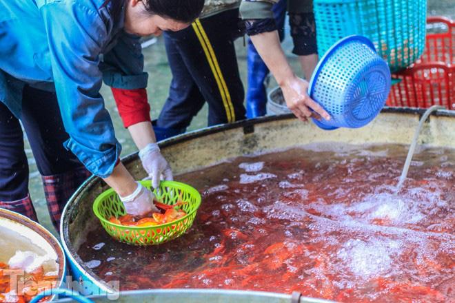 Chợ cá lớn nhất Hà Nội tất bật trước ngày ông Công ông Táo - Ảnh 2.