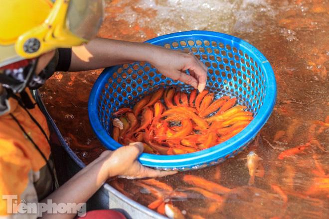 Chợ cá lớn nhất Hà Nội tất bật trước ngày ông Công ông Táo - Ảnh 4.