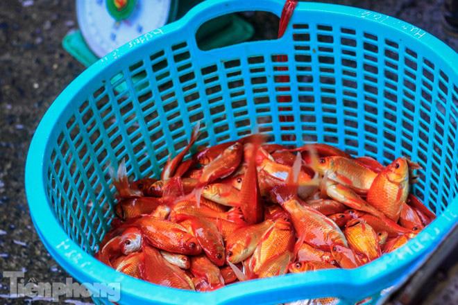 Chợ cá lớn nhất Hà Nội tất bật trước ngày ông Công ông Táo - Ảnh 5.