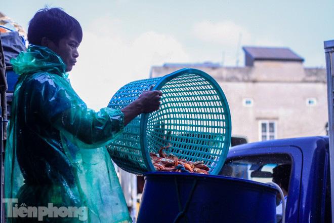 Chợ cá lớn nhất Hà Nội tất bật trước ngày ông Công ông Táo - Ảnh 6.