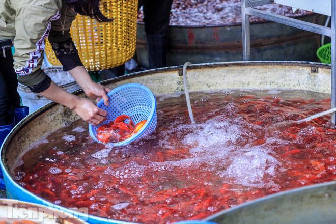 Chợ cá lớn nhất Hà Nội tất bật trước ngày ông Công ông Táo - Ảnh 10.