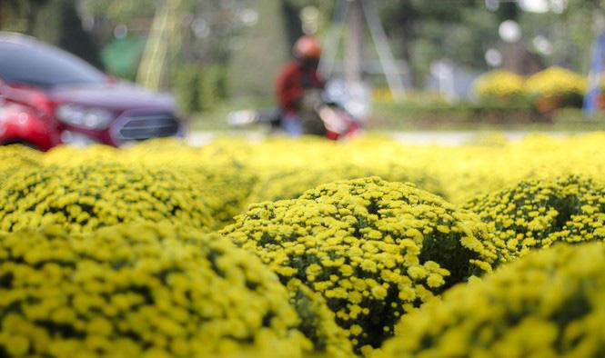 Quất bonsai tạo hình chuột khuấy động chợ hoa Tết - Ảnh 6.