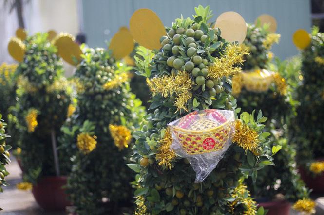 Quất bonsai tạo hình chuột khuấy động chợ hoa Tết - Ảnh 1.