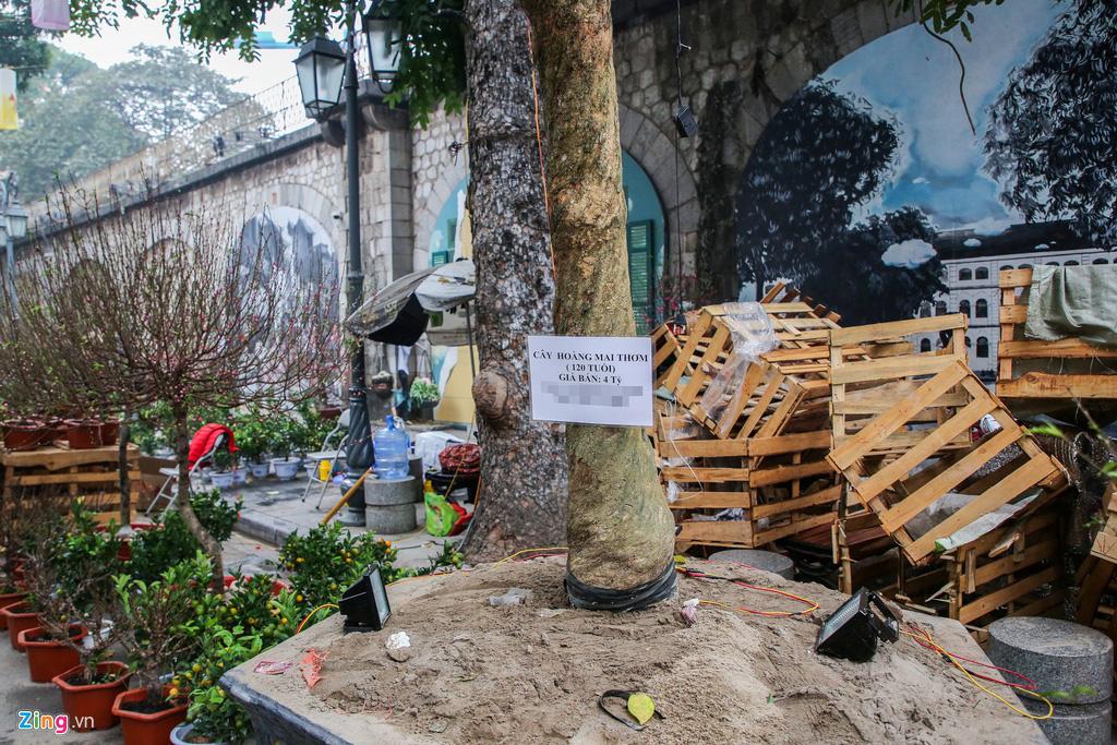 Cây mai trăm tuổi giá đắt ngang căn chung cư cao cấp ở Hà Nội - Ảnh 3.