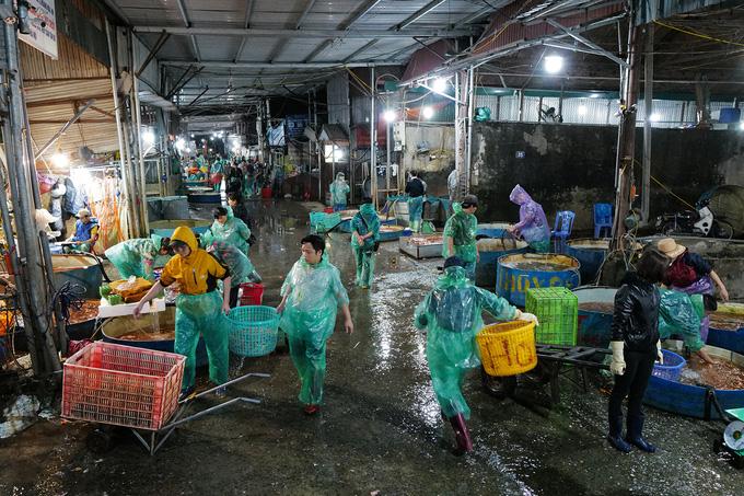Chợ đầu mối xuyên đêm bán cá chép đỏ - Ảnh 1.