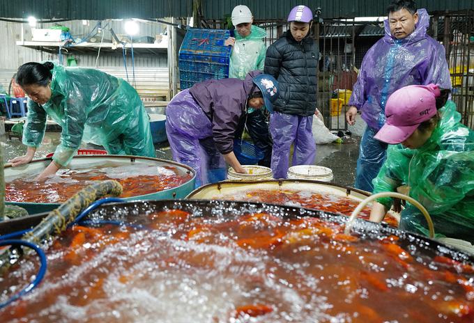 Chợ đầu mối xuyên đêm bán cá chép đỏ - Ảnh 2.