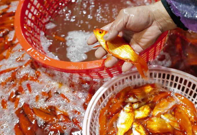 Chợ đầu mối xuyên đêm bán cá chép đỏ - Ảnh 7.