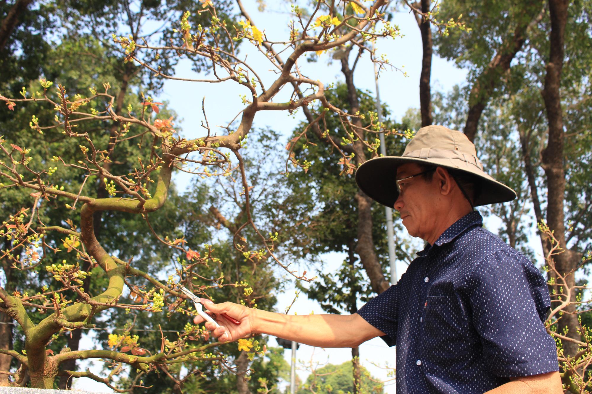 Mai Sài Gòn ồ ạt ra chợ, đi máy bay ra Hà Nội, sang Campuchia với giá hàng chục triệu đồng - Ảnh 3.