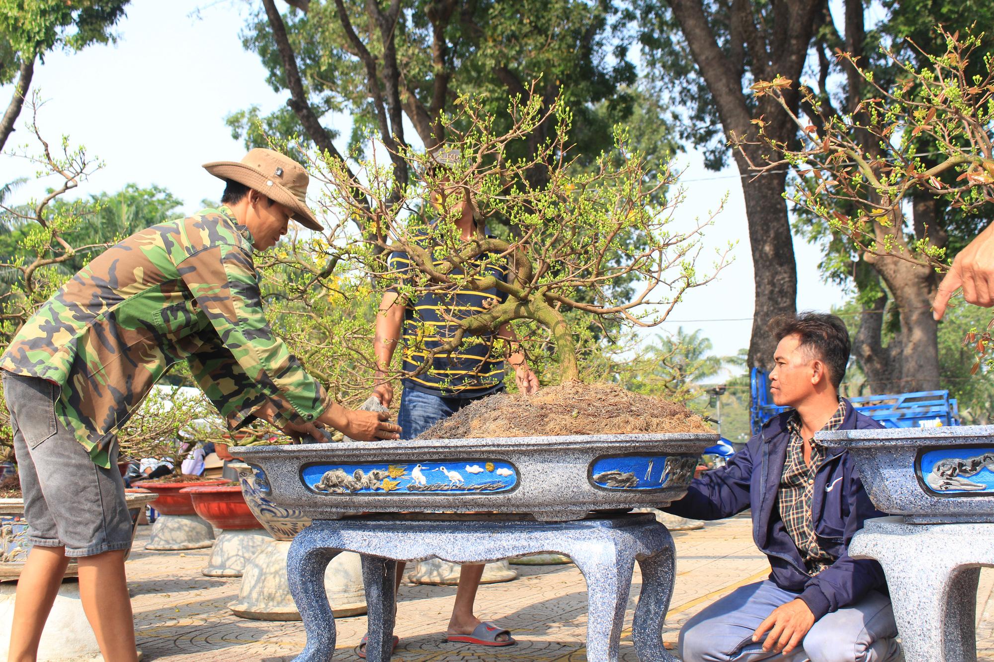 Mai Sài Gòn ồ ạt ra chợ, đi máy bay ra Hà Nội, sang Campuchia với giá hàng chục triệu đồng - Ảnh 2.