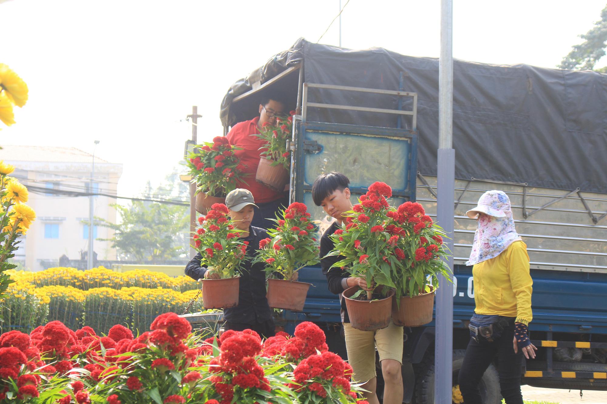 Mai Sài Gòn ồ ạt ra chợ, đi máy bay ra Hà Nội, sang Campuchia với giá hàng chục triệu đồng - Ảnh 13.