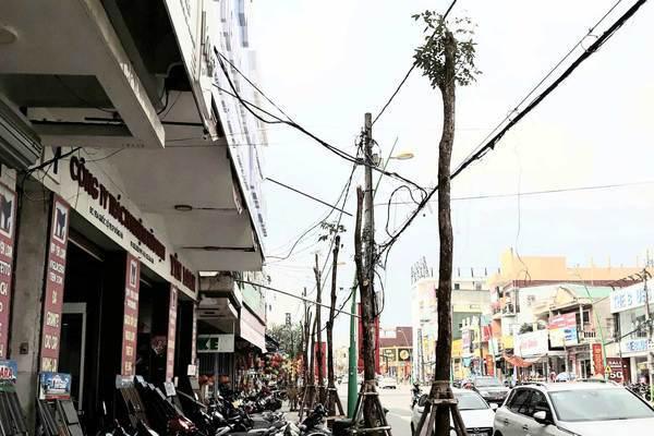 Sát Tết, cây xanh bỗng bị tỉa trụi lá trên khắp tuyến phố Đông Hà - Ảnh 2.
