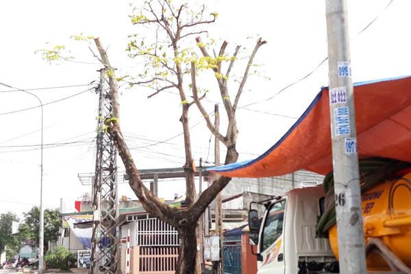 Sát Tết, cây xanh bỗng bị tỉa trụi lá trên khắp tuyến phố Đông Hà - Ảnh 5.
