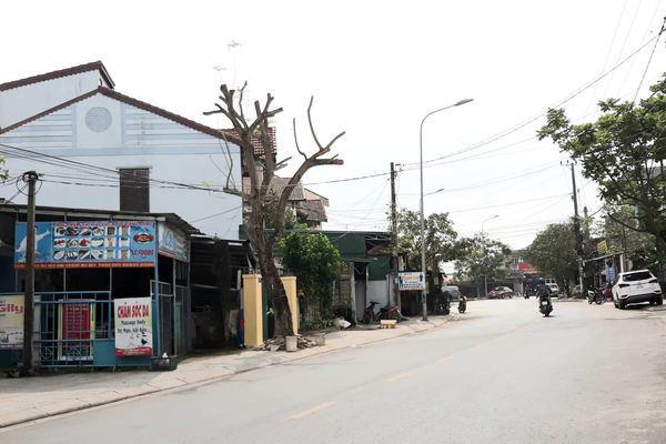 Sát Tết, cây xanh bỗng bị tỉa trụi lá trên khắp tuyến phố Đông Hà - Ảnh 6.