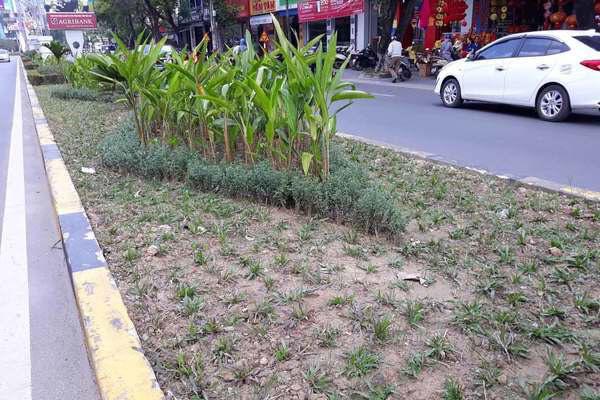Sát Tết, cây xanh bỗng bị tỉa trụi lá trên khắp tuyến phố Đông Hà - Ảnh 7.