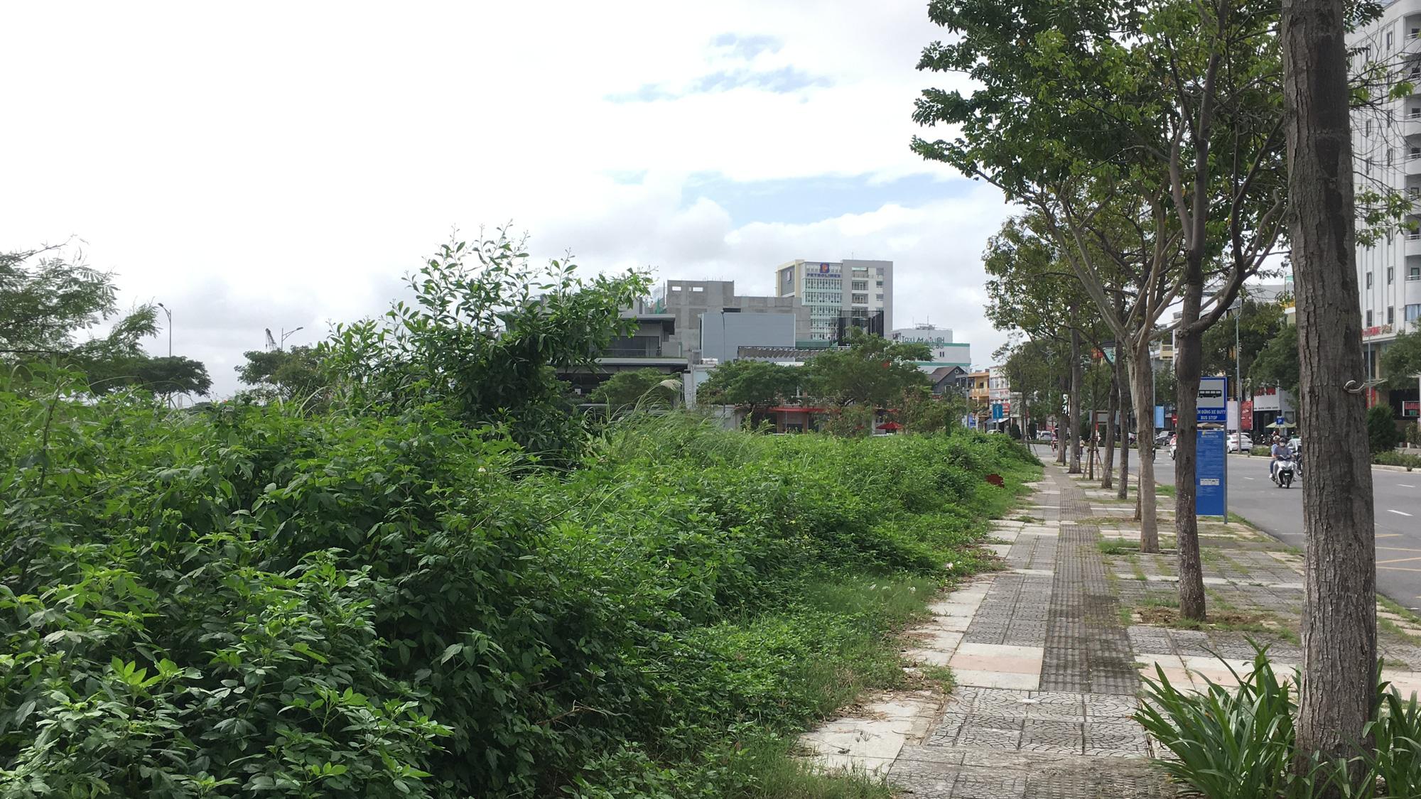 Cận cảnh 'đất vàng' Đà Nẵng làm công viên sách, mở rộng công viên APEC - Ảnh 8.