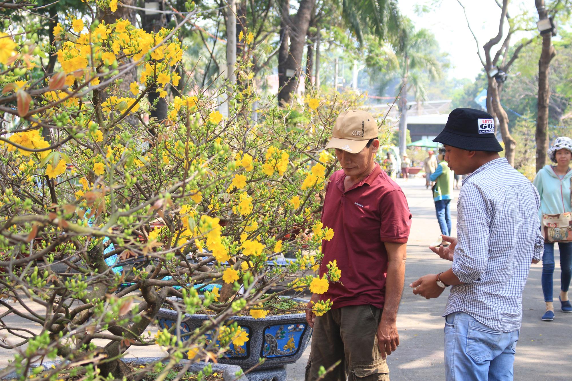 Mai, đào, tắc tiền triệu tại chợ hoa Sài Gòn ngóng người mua, có nhà vườn treo biển đồng giá 100.000 đồng mỗi chậu - Ảnh 3.