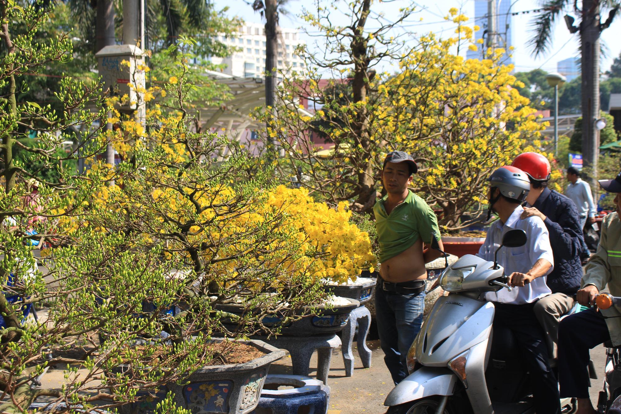 Mai, đào, tắc tiền triệu tại chợ hoa Sài Gòn ngóng người mua, có nhà vườn treo biển đồng giá 100.000 đồng mỗi chậu - Ảnh 5.