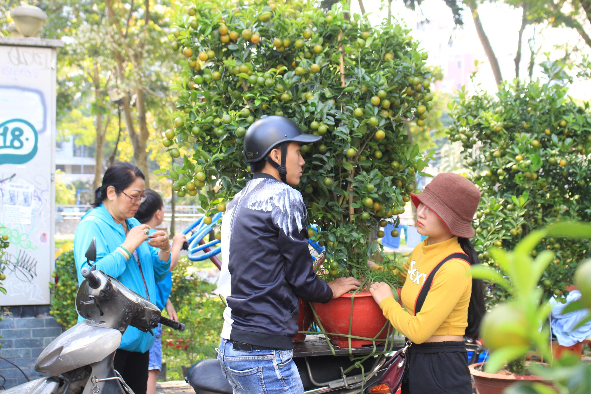 Mai, đào, tắc tiền triệu tại chợ hoa Sài Gòn ngóng người mua, có nhà vườn treo biển đồng giá 100.000 đồng mỗi chậu - Ảnh 10.